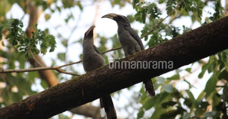 Mapping the winged residents: Nation's ever first bird atlas project launched in Kerala