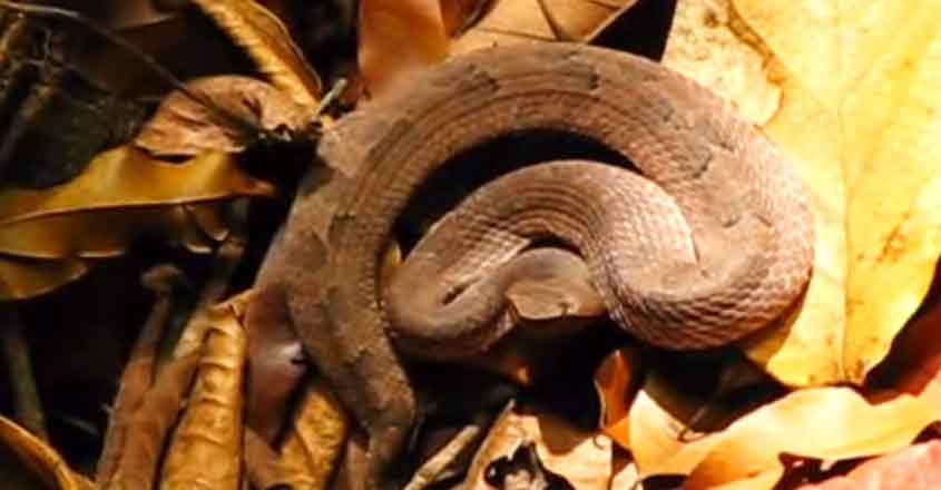 snake-pattern-06