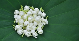 Fragrance of flowers can refresh mind, reduce fatigue, says expert