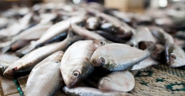 As fish availability falls, seafood processing units shift base from Kerala to Andhra