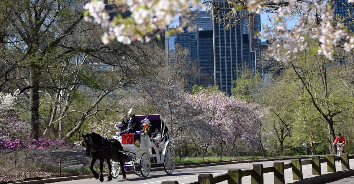 (190417) -- NEW YORK, April 17, 2019 (Xinhua) -- Visitors ride a carriage in the Central Park, New York, the United States, on April 16, 2019. With climbing temperatures and blooming flowers, people enjoy their leisure during the springtime in New York. (Xinhua/Han Fang/IANS)