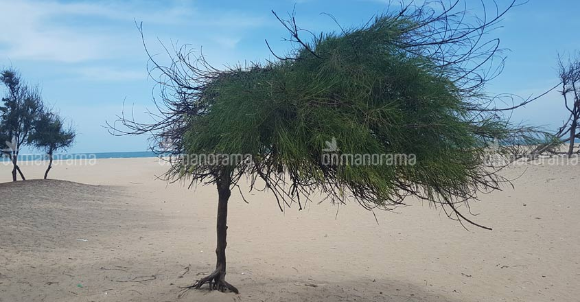 Lesson for parched Chennai from a Dhanushkodi village