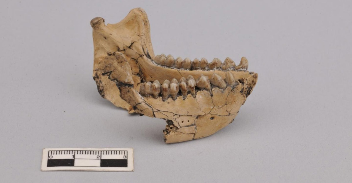 Fossils of 6.4 million-years-old monkey found in China.