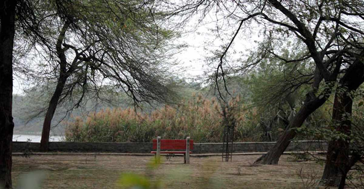 Delhi has a large number of green areas accessible to its people (Photograph: Rahul Kumar)