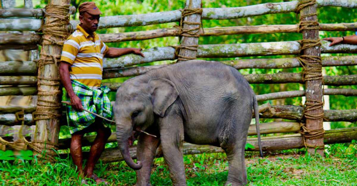 elephant rehabilitation kottoor