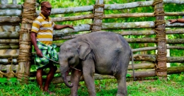 Elephant care centre in Kerala to be world's largest