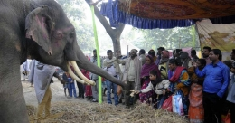 Bateshwar animal fair, the oldest in India, won't be held this year