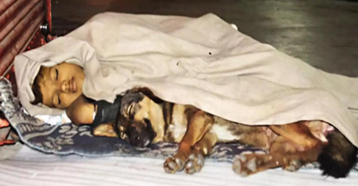 Footpath was him home, stray dog lone friend till a photo changed UP boy's life