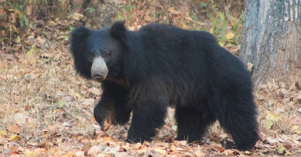 Two sloth bears rescued by forest officials from well in Telangana