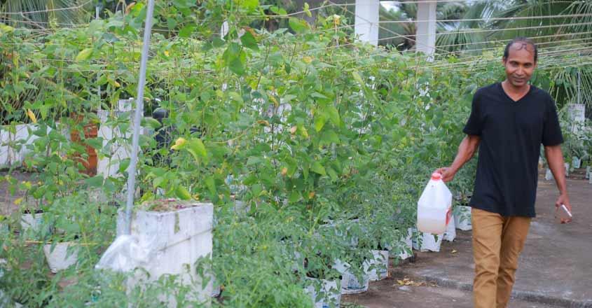 veg-terrace-garden-02