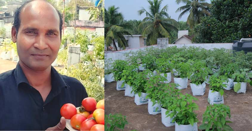 Kozhikode man harvests 100 kilos of vegetables from terrace every month
