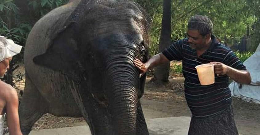 Bihar: Animal lover Akhtar Imam transfers his property to his two elephants.