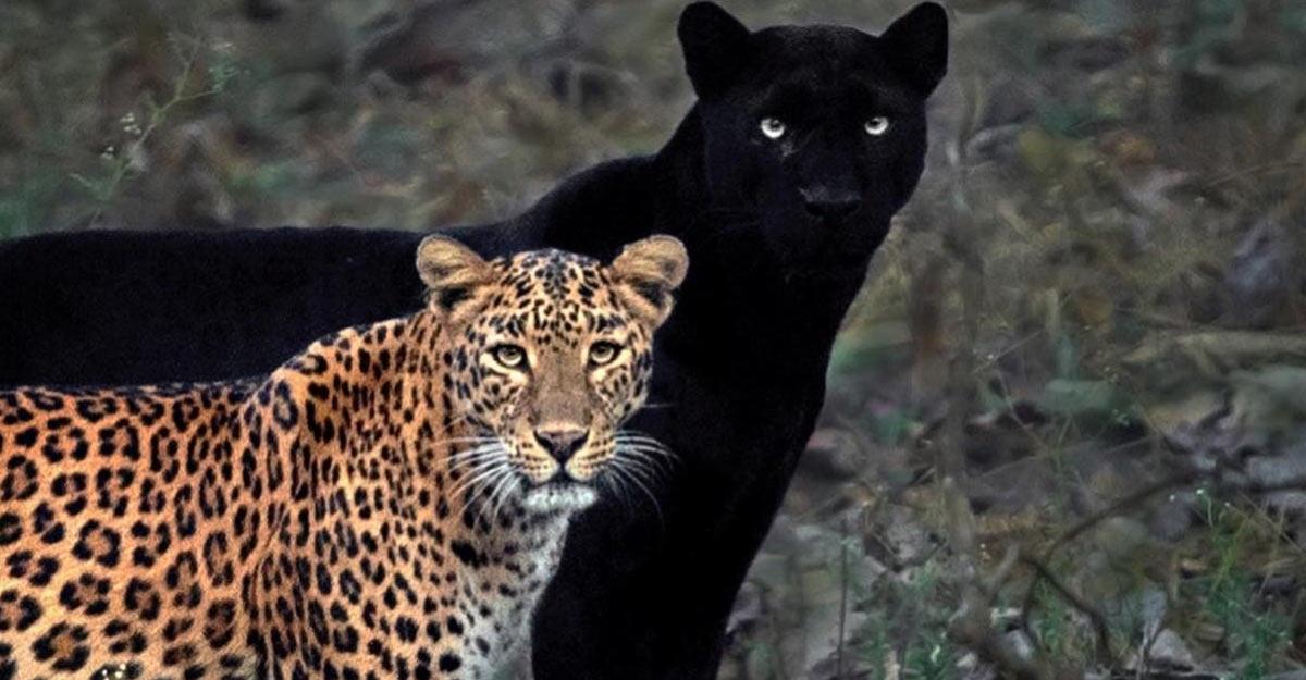wildlife photograph