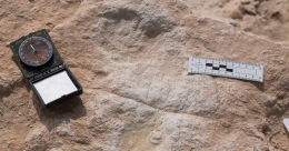Human footprints dating back to 120,000 years discovered in Saudi Arabia