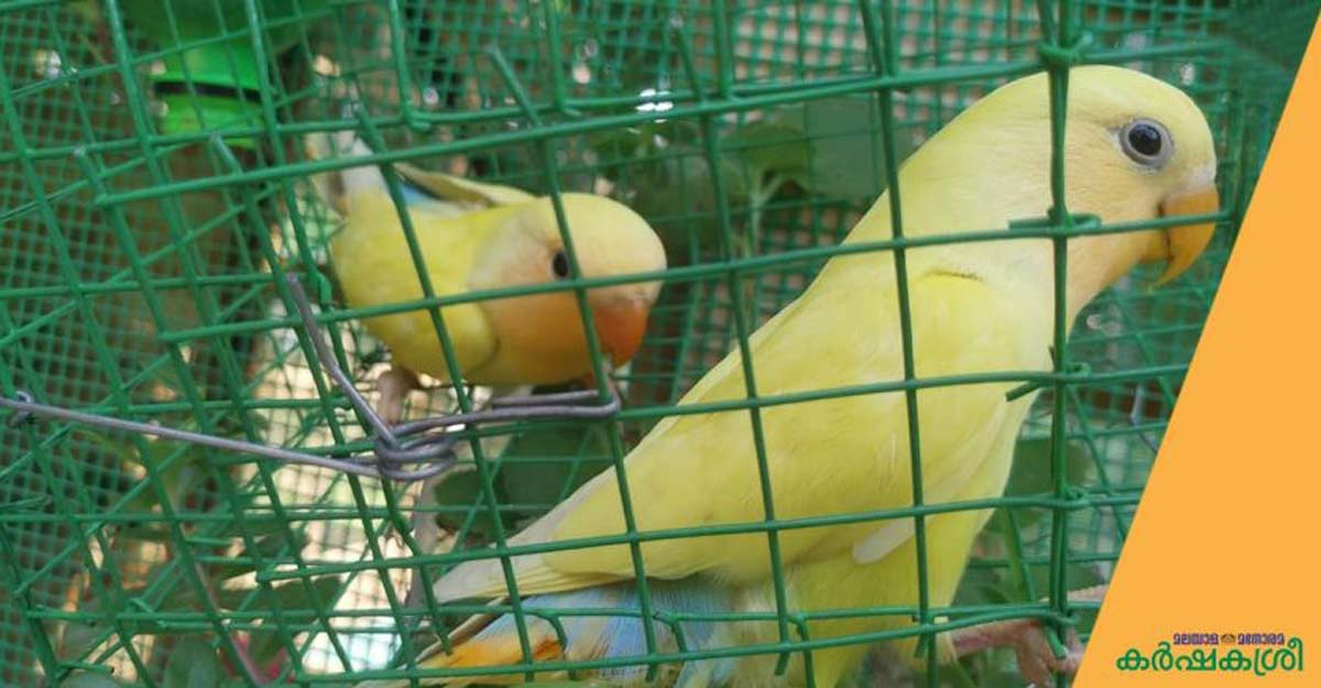 Ever wondered what those colourful birdcages can do to your adorable pets?