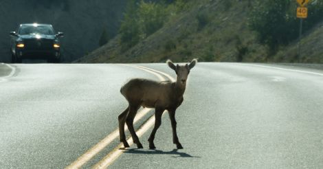 Road kills: A serious threat to global wildlife