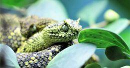 Wildlife rescue and rehabilitation centers