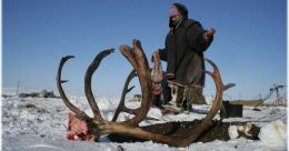 Call of the Wild: killing wildlife, buying trouble