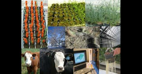 Modern farming practices: good news for food security, bad news for sustainability