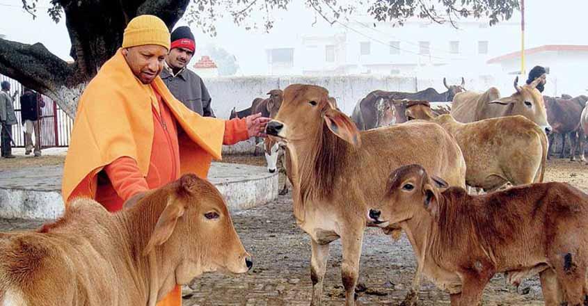 Yogi on a wild goose chase as stray cattle menace flares up