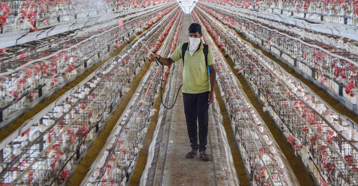 Bird deaths reported in Jharkhand, UP; Centre issues advisories on testing, culling operations
