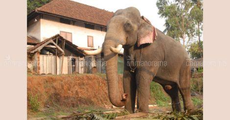 Elephant Thiruvambadi Sivasundar dies | Video