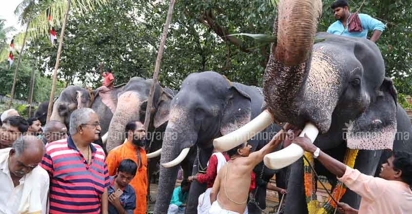 DNA database of captive elephants ready