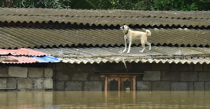 Kerala Floods - Aranmula