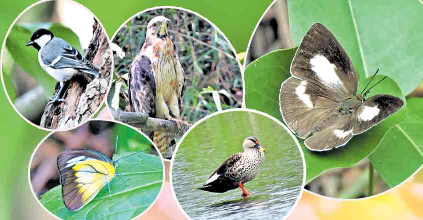 Birds, butterflies adapt well to Kochi's diverse topography