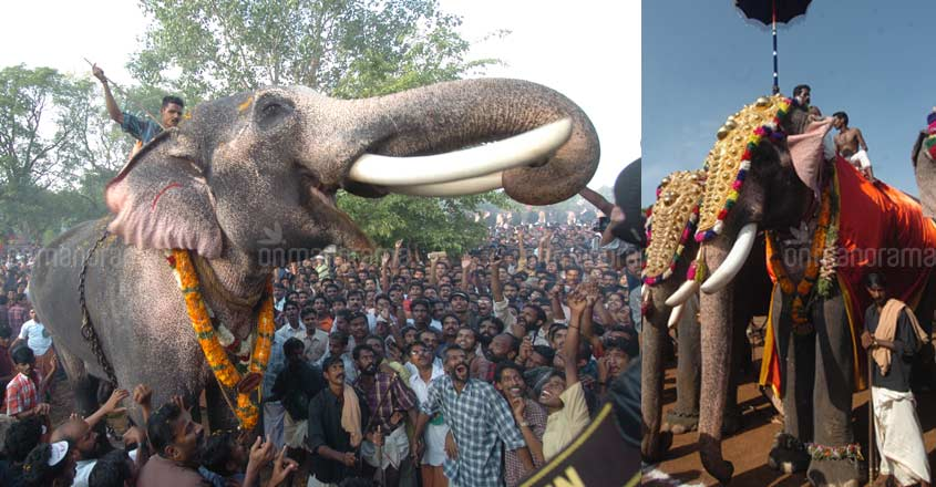 Know up close Thechikottukavu Ramachandran, the star tusker
