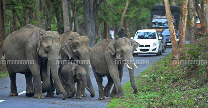 Protest march in Wayanad against night traffic ban on NH through tiger reserve