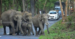 Protest march in Wayanad against night traffic ban on highway through tiger reserve
