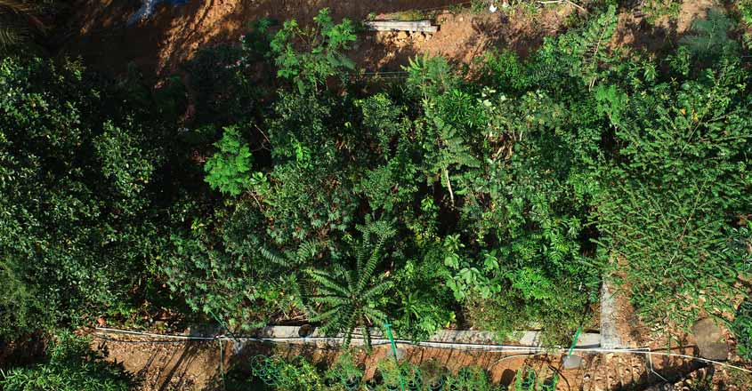On a green mission, Indian Navy to create Miyawaki forest in Kochi