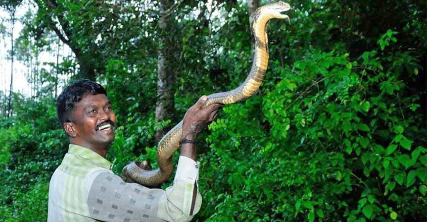 Vava Suresh, who rescued 50,000 snakes in Kerala, stable after viper bite