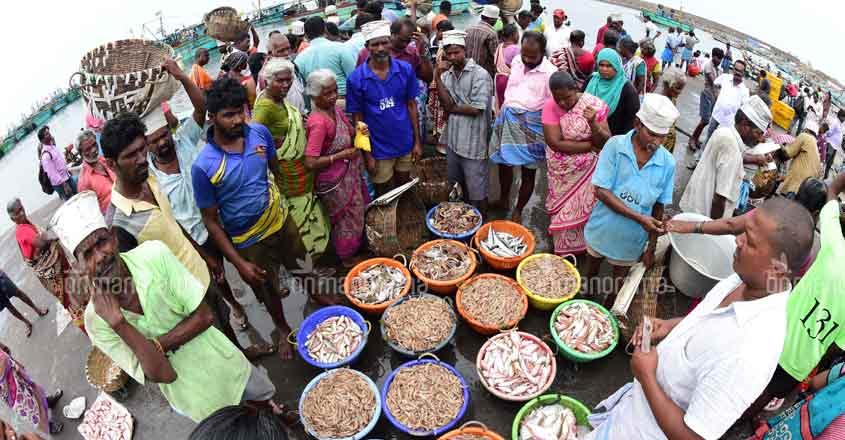 Opinion   Coronavirus should drive Kerala to adopt sustainable marine fishing practices
