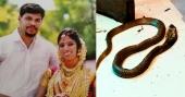 Murder mystery unearthed: It took Rs 10,000 and 2 snakes for husband to kill Anchal native