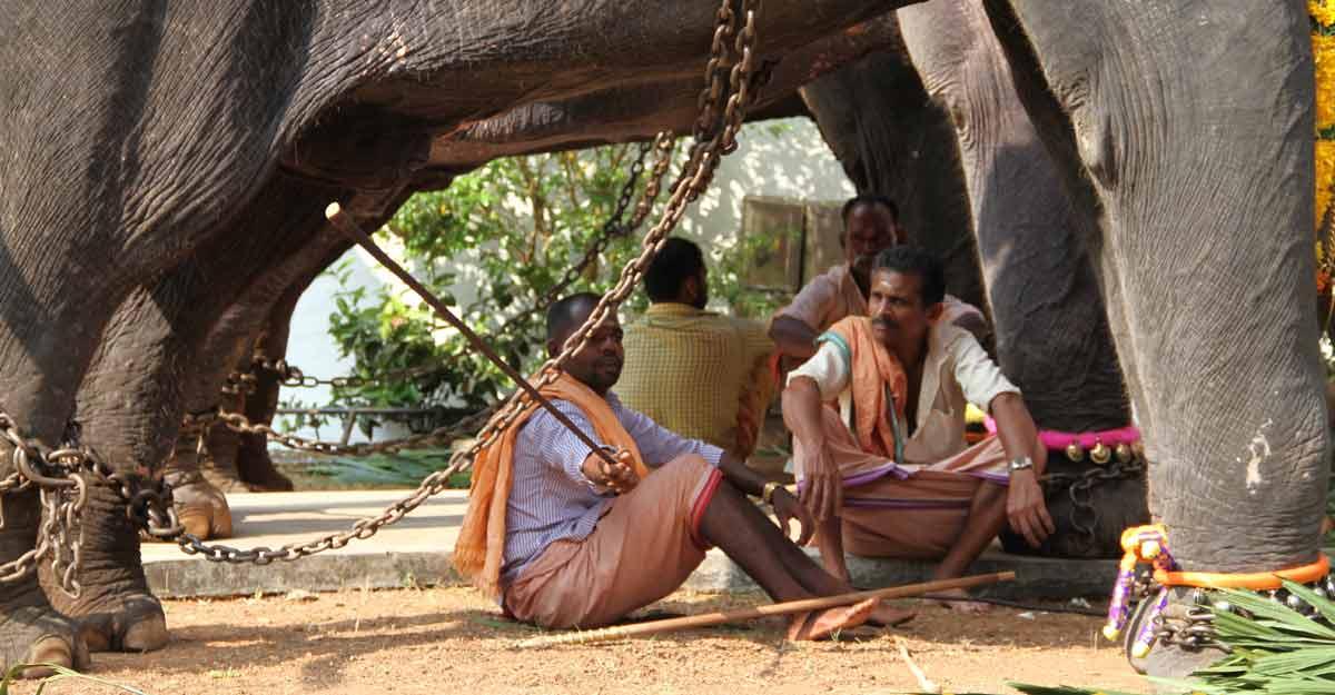 Torture in captivity kills more elephants in Kerala, but perpetrators go scot-free