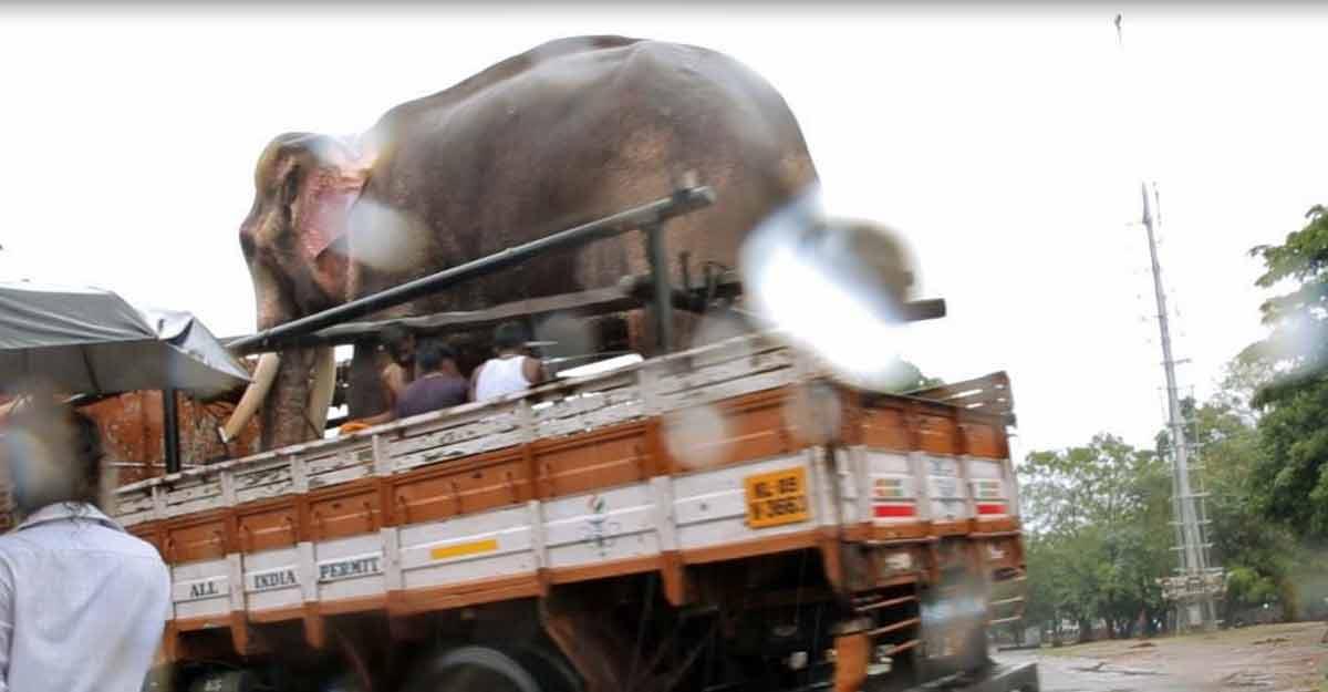 captive-elephant-truck