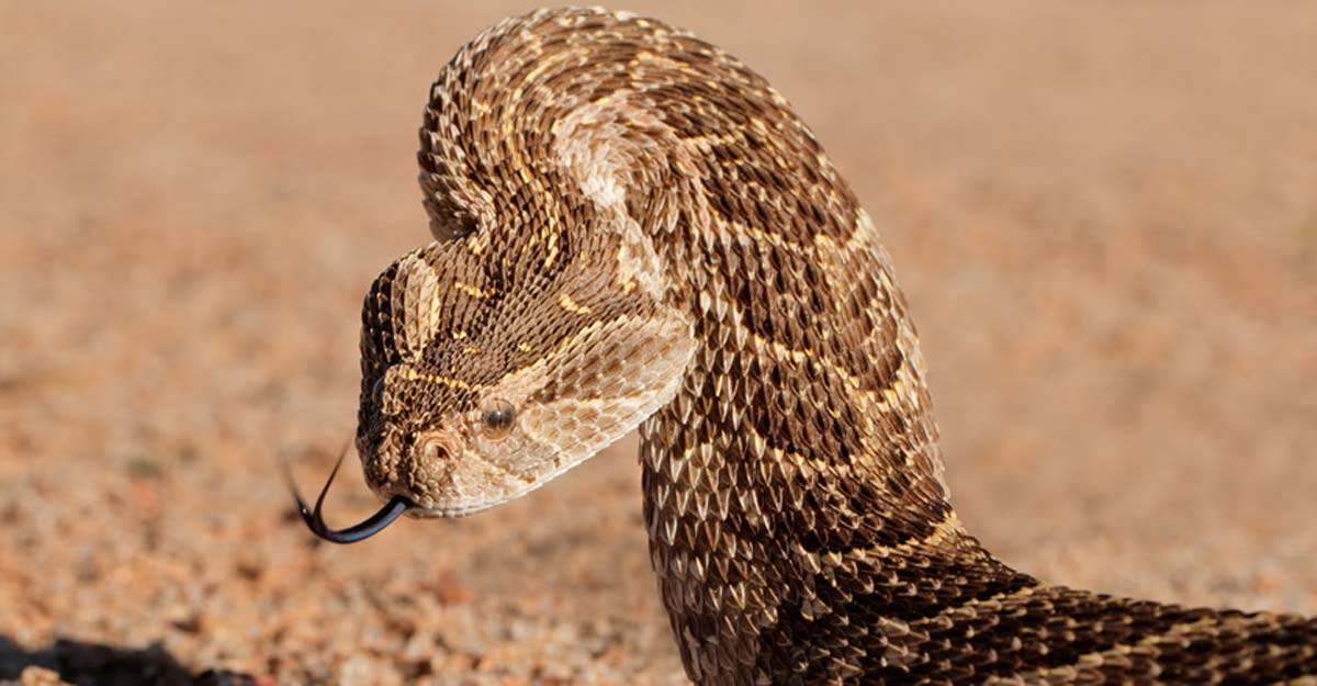 Jail, fines await snake catchers without licence in Kerala