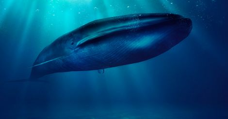 KTM_4TH-P14 SPORTS.indd, Parents beware: a deadly blue whale may swallow your child