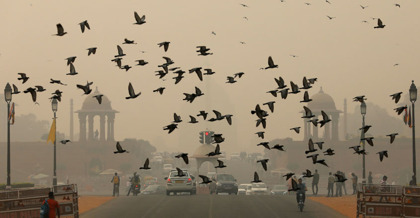 birds-climate-change