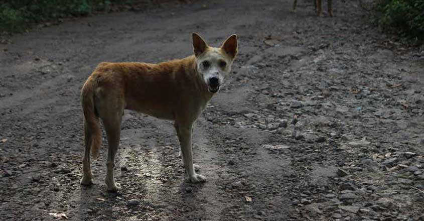 Fear stalks Alappuzha village as elusive masked man hacks dogs to death