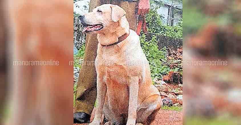 sniffer-dog-thara