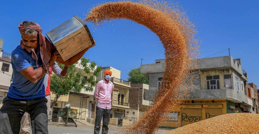 https://img.onmanorama.com/content/dam/mm/en/news/nation/images/2020/4/16/agriculture-wheat-grains-covid.jpg