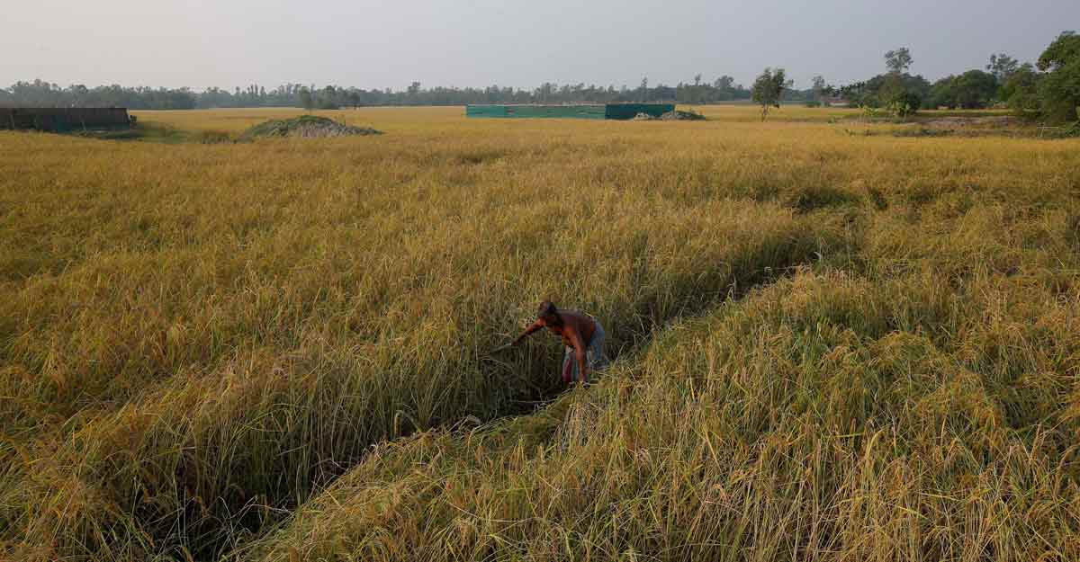 Podcast   Explained: Why many farmers oppose Modi's Farm Bills
