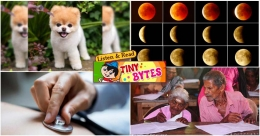 Tiny Bytes: World's cutest dog dies, super blood wolf moon and more