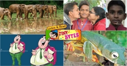 Tiny Bytes: Kerala education system, rare frog endemic to Western Ghats, and more
