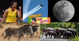 Tiny Bytes: Supersonic Sindhu, mystery of zebra stripes, Moon's water factory and more