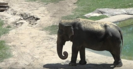 Dad flees wild elephant, 3-year-old falls off hands, dies