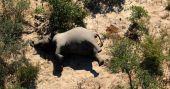 Botswana probes mysterious death of hundreds of elephants